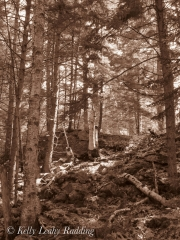 forest-sepia-coastal-maine-botanical-gardens-Kelly-Leahy-Radding
