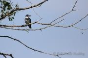 kingfisher-Kelly-Leahy-Radding