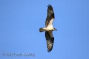osprey-Kelly-Leahy-Radding