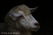 portrait-of-a-pygora-goat-Kelly-Leahy-Radding