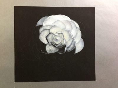 camellia, fibonacci, flower