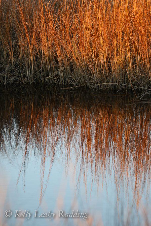 sunset colors in the marsh. Barn Island, Stonington, CT - 1/3/2016