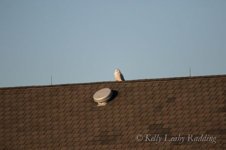white blob on rooftop