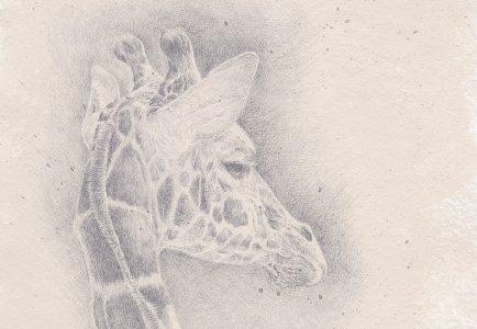 silverpoint giraffe