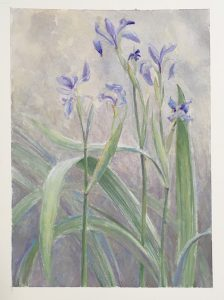 Blue flag iris, Kelly Leahy Radding, Oswegatchie