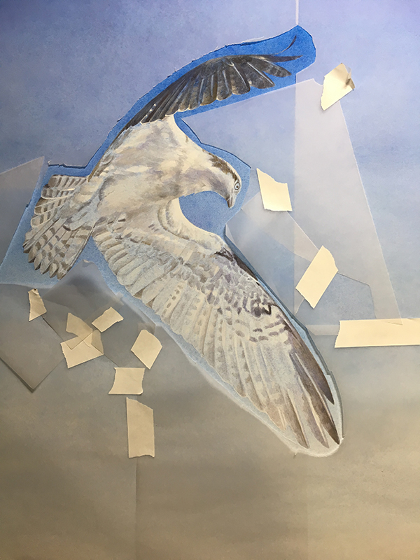 Osprey fishing, work-in-progress, Kelly Leahy Radding