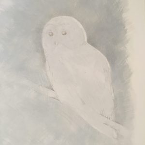 barred owl, silverpoint