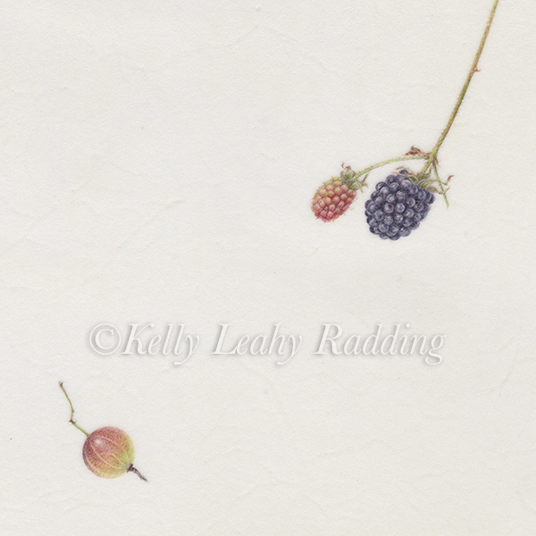 gooseberry, black raspberries, Kelly Leahy Radding