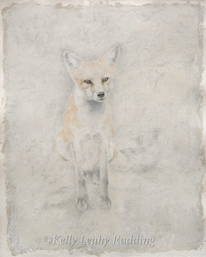 Kelly Leahy Radding, red fox, silverpoint, casein