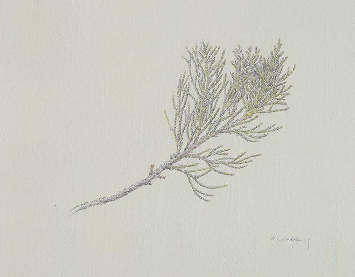 silverpoint, watercolor, casein, red cedar