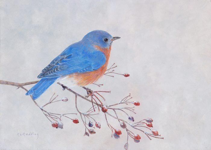 eastern bluebird, casein, panel, winter, Kelly Leahy Radding