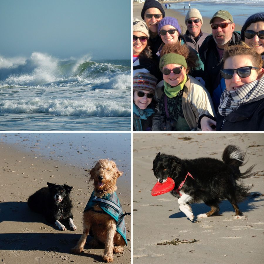 border collie, maine, family, waves, beach, golden doodle, frisbee dog