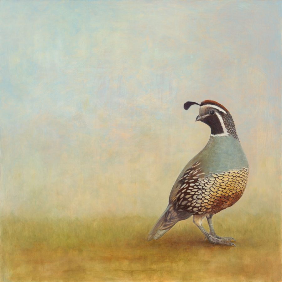 California quail, quail, kellyleahyradding, alkyd, oil, egg tempera, painting
