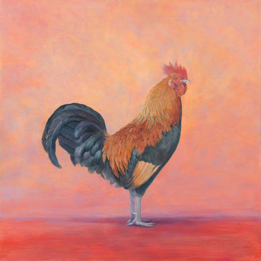 Confidence – Fire, Rooster, kellyleahyradding, kauai, hawaii, bird, painting, alkyd, oil, egg tempera