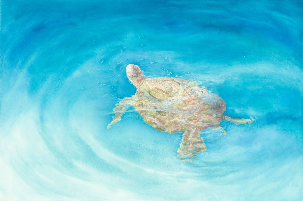 Longevity – Water, greenseaturtle, sea turtle, turtle, watercolor, kellyleahyradding, painting