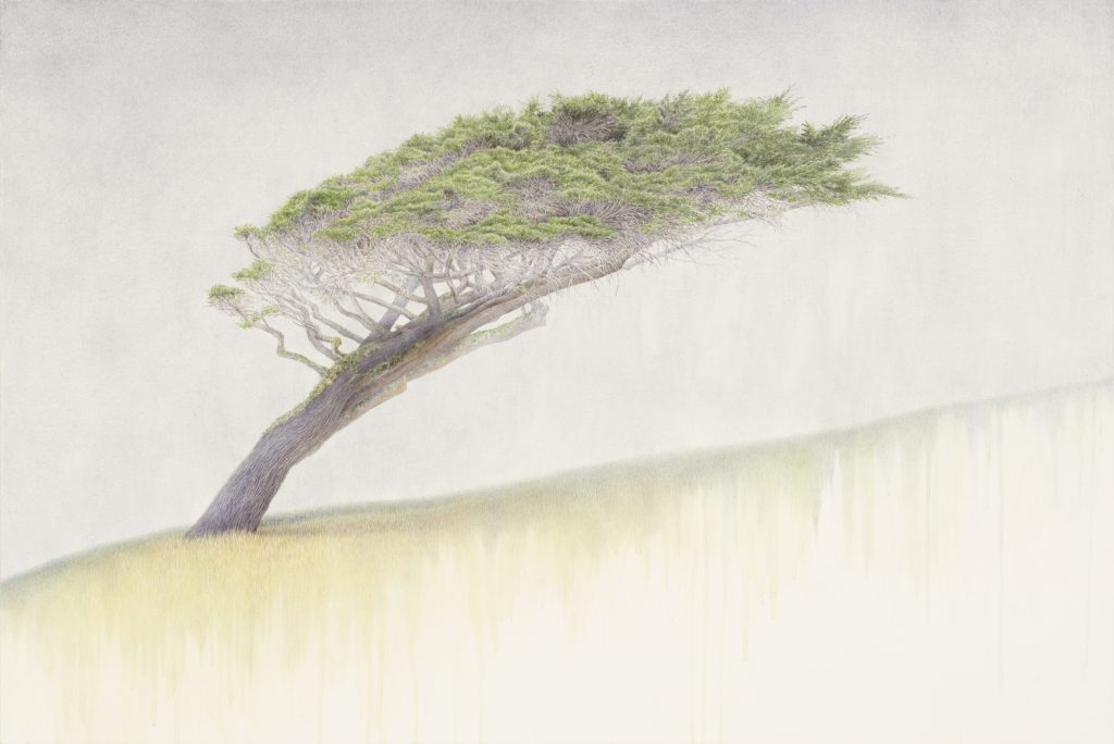 Endurance – Earth, cypress, pointreyes, california, monterey cypress, kellyleahyradding, watercolor, painting