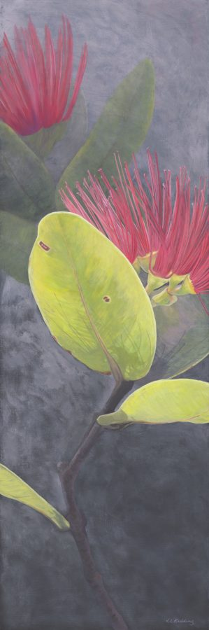 ohia lehua, flower, hawaii, kauai, kelly leahy radding, casein